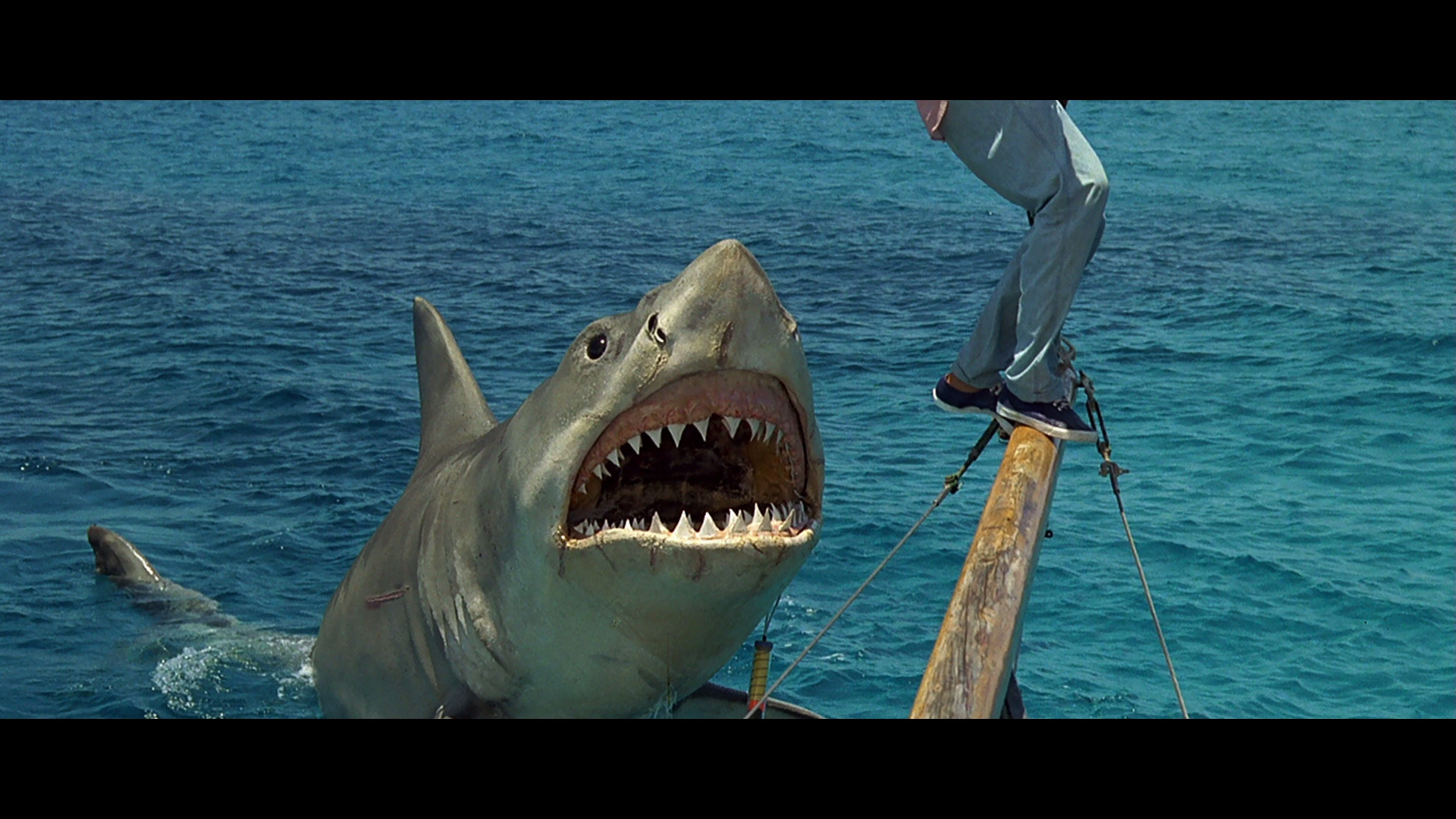 Jaws: The Revenge Blu-ray Review - DoBlu.com